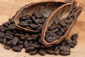 С какво е полезно какаото за нас?