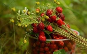 С какво са полезни ягодите за нас?