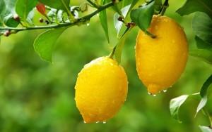 Нещата, които можеш да направиш с лимоновите кори и лимоновия сок.