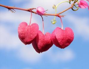 22 мисли на Учителя Петър Дънов за любовта между хората