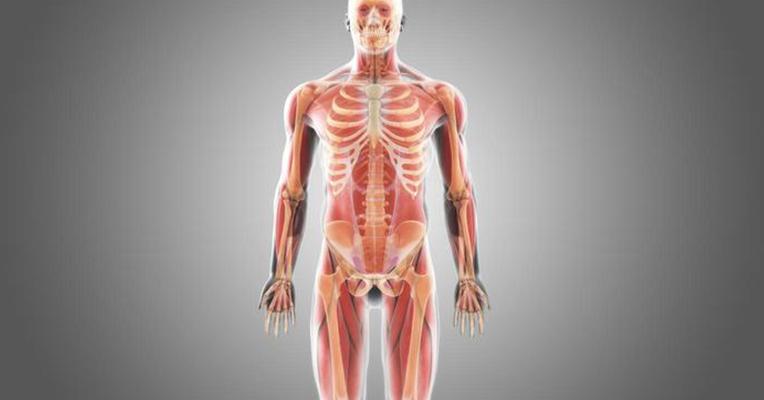 99 удивителни факти за човешкото тяло